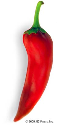 Pepper_anaheim_red